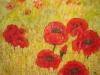 Rote Blumen - Komplementär Kontraste: Erntezeit