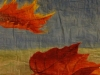 Cilli Herbstbild